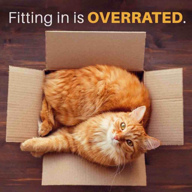 Cat curled up in cardboard box with text stating 'fitting in is overrated'