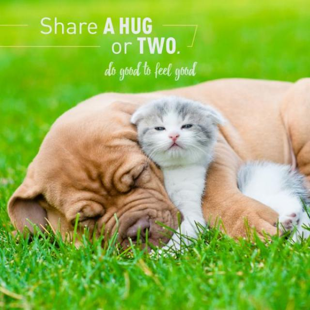 "A sleeping dog lies in a field of grass holding a tired kitten. The text above them reads ""Share a hug or two. Do good to feel good"""