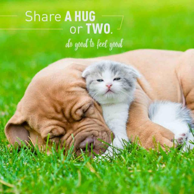 "Photo of a dog and kitten hugging with text that says ""Share a hug or two: Do good to feel good."""